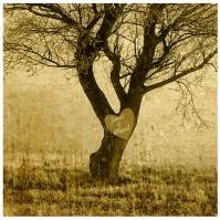 Sweetheart Tree-001