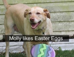 Molly-001