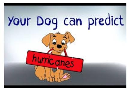 Dog predictor-001
