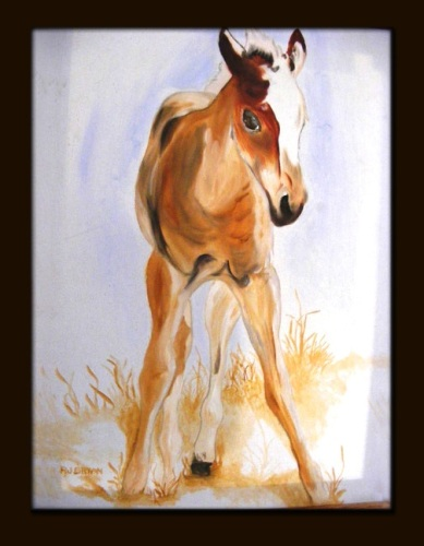 Newborn Colt by Robert J Bryan
